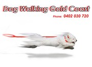 Dog Walking Gold Coast