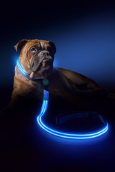 Find Led Dog Collar Light in Melbourne by Squeaker