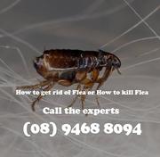 Find Best Flea Control in Perth