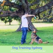 Dog Training Sydney