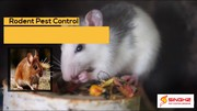 Free Quote For Pest Control in Brisbane